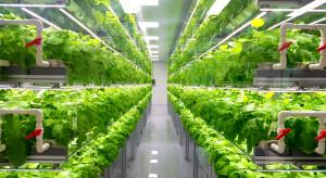 W Abu Zabi powstanie największa na świecie uprawa owoców i warzyw pod dachem