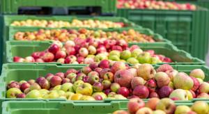 Mazowsze: Rosną ceny jabłek przemysłowych