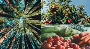 Powstanie Ministerstwo Rolnictwa i Leśnictwa