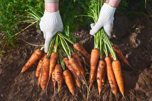 Włochy: Rolnictwo ekologiczne nieznacznie się rozwinęło