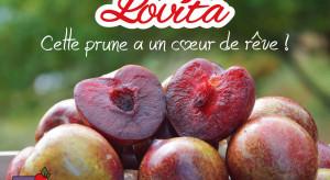 Lovita - nowa odmiana śliwek dostępna na francuskim rynku