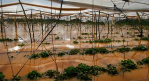 Włochy: Ulewne deszcze i powodzie wyrządziły ogromne szkody w rolnictwie