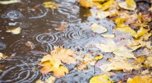 Pogoda na 10 października: Będzie deszczowo