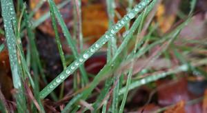 IMGW: w nadchodzącym tygodniu będzie pochmurno, deszczowo i chłodniej