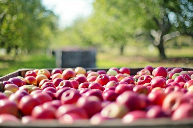 Lidl sprzedaje jabłka 'prosto z drzew' od sadowników w promocyjnej cenie