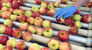 Mazowsze: Jakie ceny jabłek na sortowanie?