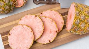 Ananas Pinkglow - luksusowy ananas o różowym miąższu
