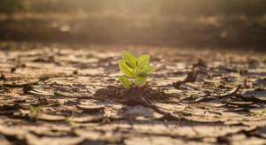 Raport: Rolnictwo jest sektorem szczególnie narażonym na skutki zmiany klimatu