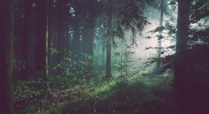 Ministerstwo rolnictwa będzie mieć nową kompetencję - leśnictwo