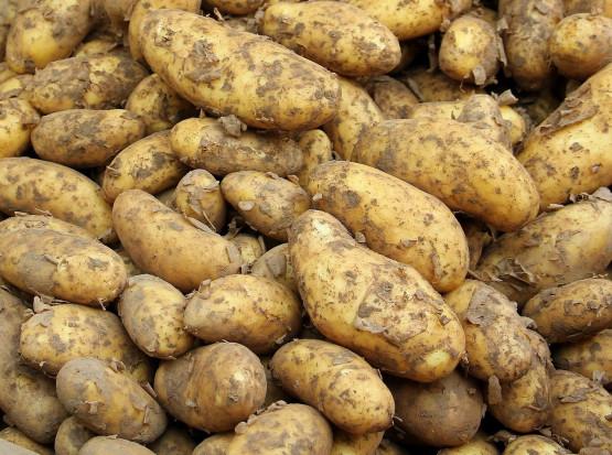 Rynek ziemniaków: Spadki cen wywołane zdecydowanie większą podażą (analiza)