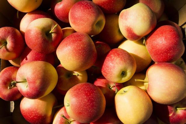 Węgry: Producenci jabłek spodziewają się w tym roku mniejszych zbiorów