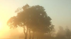 IMGW: W nocy silna mgła w czterech województwach