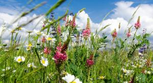 Raport: bioróżnorodność w Europie zagrożona mimo wysiłków, by ją chronić