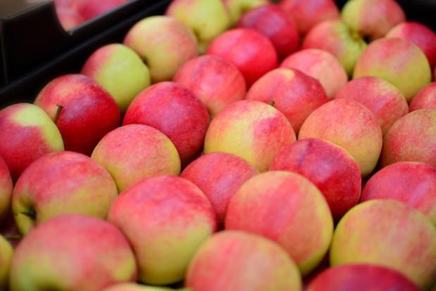 Argentyna dwukrotnie zwiększa eksport jabłek do Brazylii
