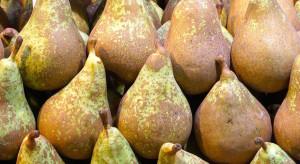 Rosselchoznadzor wprowadza zakaz importu gruszek z obwodu grodzieńskiego Białorusi