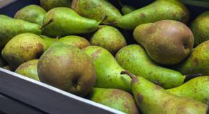 Jak kształtują się ceny gruszek na rynku Bronisze? (analiza)