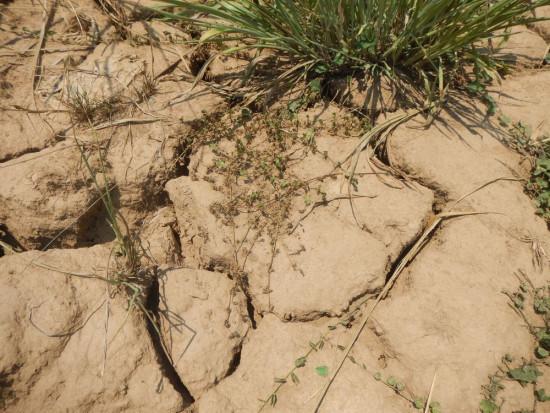 Państwowa pomoc w czasie suszy – na co mogą liczyć sadownicy?