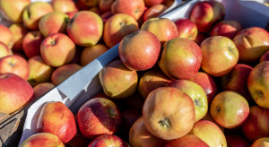 Jakie ceny jabłek na rynkach hurtowych? (analiza)