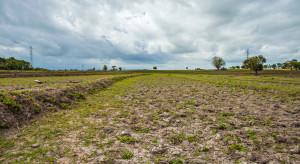 Czym jest System Monitoringu Suszy Rolniczej IUNG?