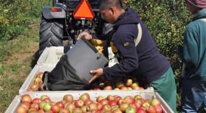 Krajowa Rada Izb Rolniczych wnioskuje o wydłużenia pozwolenia na pracę sezonową