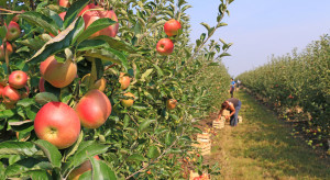 W. Brytania: Farmerzy potrzebują zagranicznych pracowników sezonowych