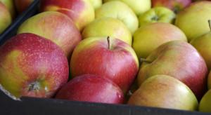 Francja: Eksport jabłek do Kolumbii wzrósł o 136%