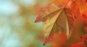 Pogoda na 31 października: Zachmurzenie duże, ale pojawią się przejaśnienia