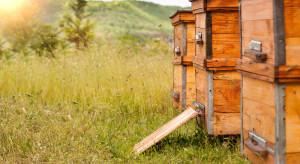 """ARiMR: Od 30 października nowe warunki udziału w mechanizmie """"Wsparcie rynku produktów pszczelich"""""""