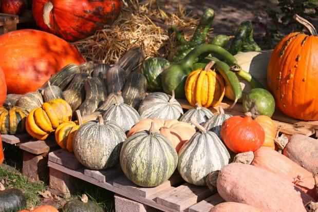 W zw. z Halloween na świecie marnuje się tysiące ton dyń