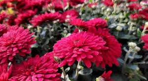 ARiMR i KOWR kupią rośliny niesprzedane z powodu zamknięcia cmentarzy