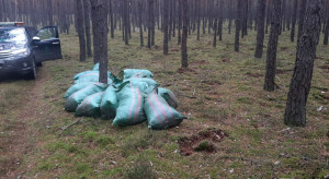 Złodzieje kradli z lasu mech