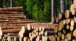 Lasy Państwowe odrabiają tegoroczne straty spowodowane przez COVID-19