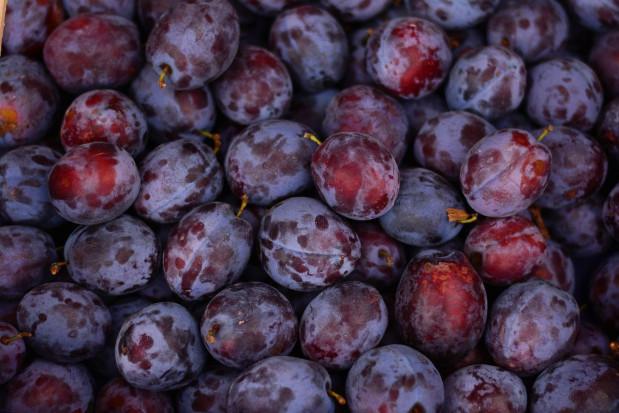 Mołdawskie śliwki trafiają na europejskie rynki