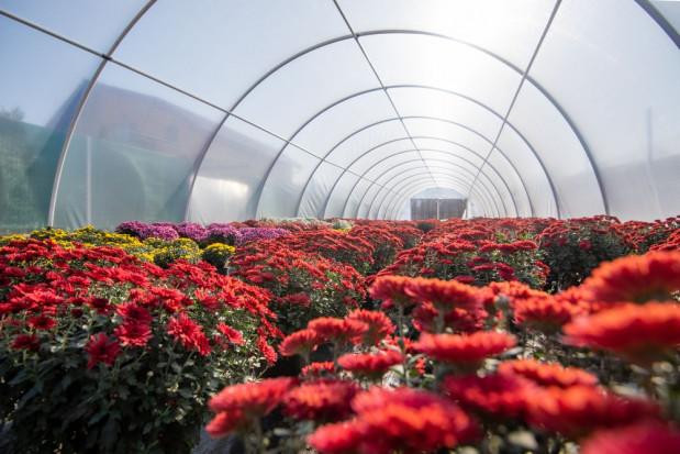Jest możliwość wydłużenia terminu składania wniosków o rekompensaty za niesprzedane kwiaty