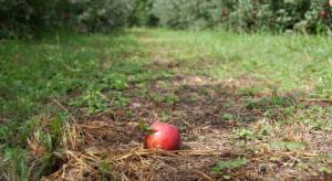 Lubelskie: 16-letni obywatel Kazachstanu śmiertelnie postrzelony w sadzie w Kluczkowicach