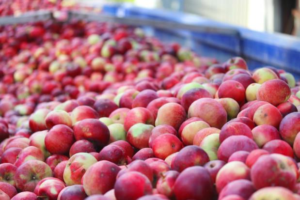Jabłka przemysłowe 2020: Po spadku cen trwa stagnacja