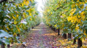 Jakie zabiegi wykonać jesienią po zbiorach jabłek?