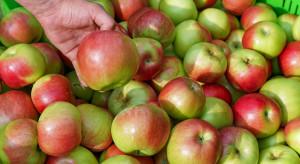 Raport o perspektywach europejskiego rynku jabłek i gruszek w bieżącym sezonie