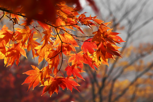 Prognoza pogody na sobotę 7 listopada