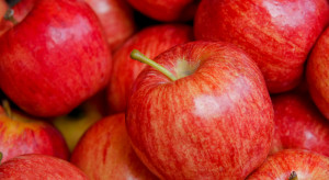 Popyt na polskie jabłka jest dobry, szczególnie ze strony Egiptu
