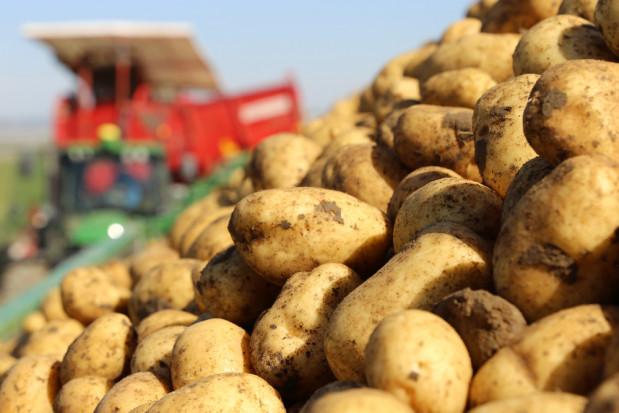 Copa-Cogeca: należy ograniczać powierzchnię upraw ziemniaków na przetwórstwo