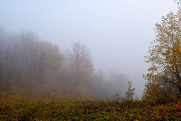 IMGW: gęste mgły w 8 województwach