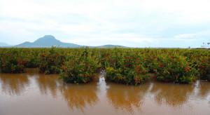 Hiszpania: Po ulewnych deszczach straty w sektorze owocowo- warzywnym sięgają 62 mln euro