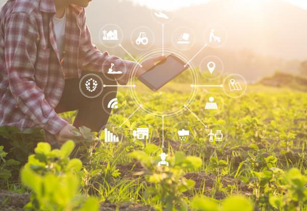 MFiPR: 100 mln zł dla firm opracowujących nowe technologie w rolnictwie