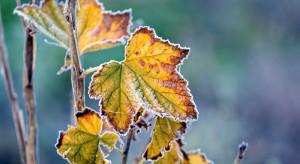 Pogoda na 10 i 11 listopada: W dzień częściowe zachmurzenie, w nocy możliwe przygruntowe przymrozki