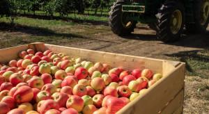 Węgry: Tegoroczne zbiory jabłek mniejsze o połowę