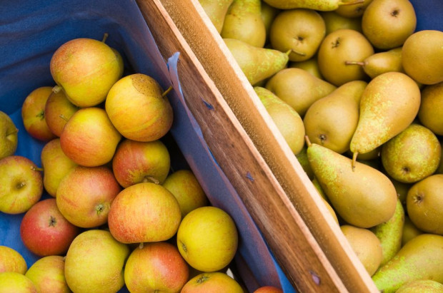 USDA: Argentyna zbierze więcej jabłek i gruszek niż w sezonie 2019