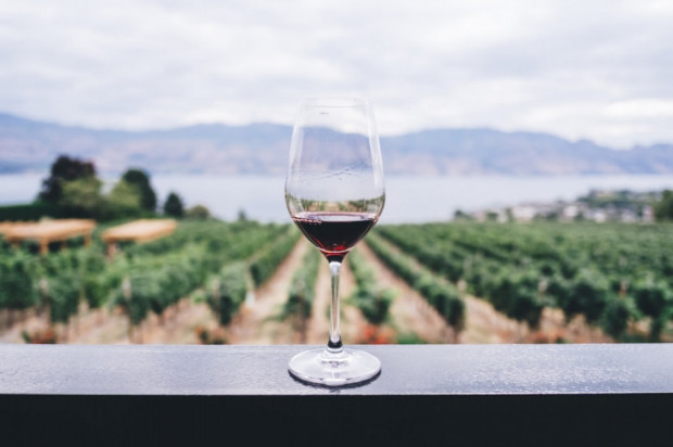 Dobre zbiory winogron, ale kryzys COVID-19 rzuca cień na entuzjazm plantatorów