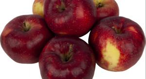 Lidl: 1,99 zł/kg za jabłka dużego kalibru od polskich sadowników