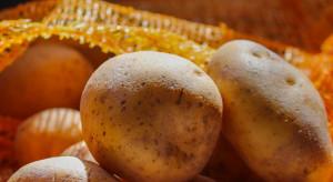 Ziemniaki popularne w diecie bezglutenowej